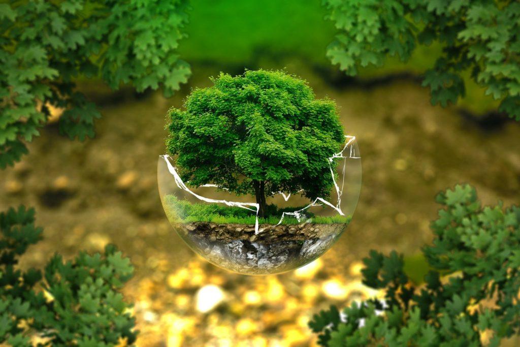 Umweltschutz – Bild eines Baumes