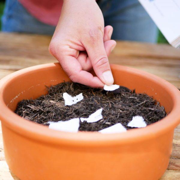 Foto einer Hand, die Samen einpflanzt